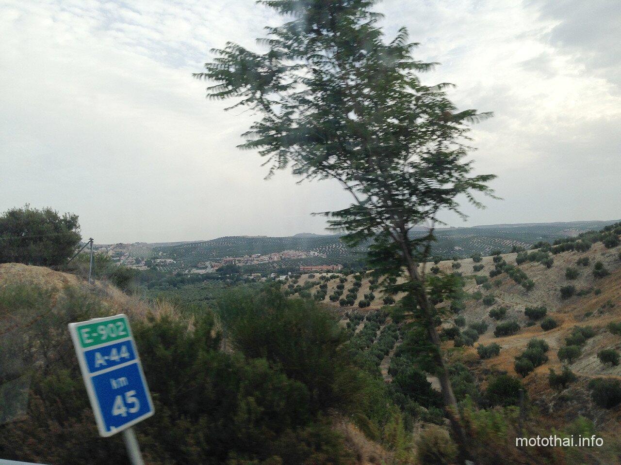 Оливковые поля в Испании